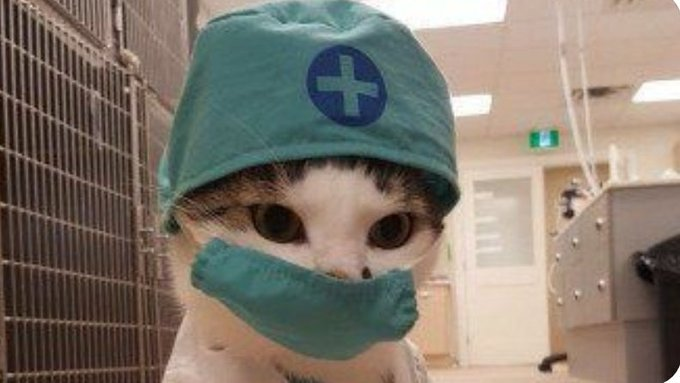 The Doctor is in 🏥😷👩⚕️😹⚕️💉 #NationalDressUpYourPetDay Photo