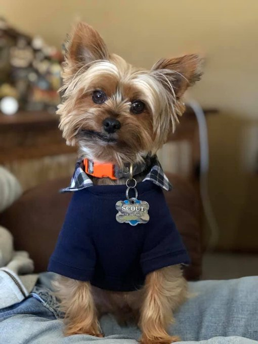 I am loving seeing pictures of your pets on this #NationalDressUpYourPetDay! Photo