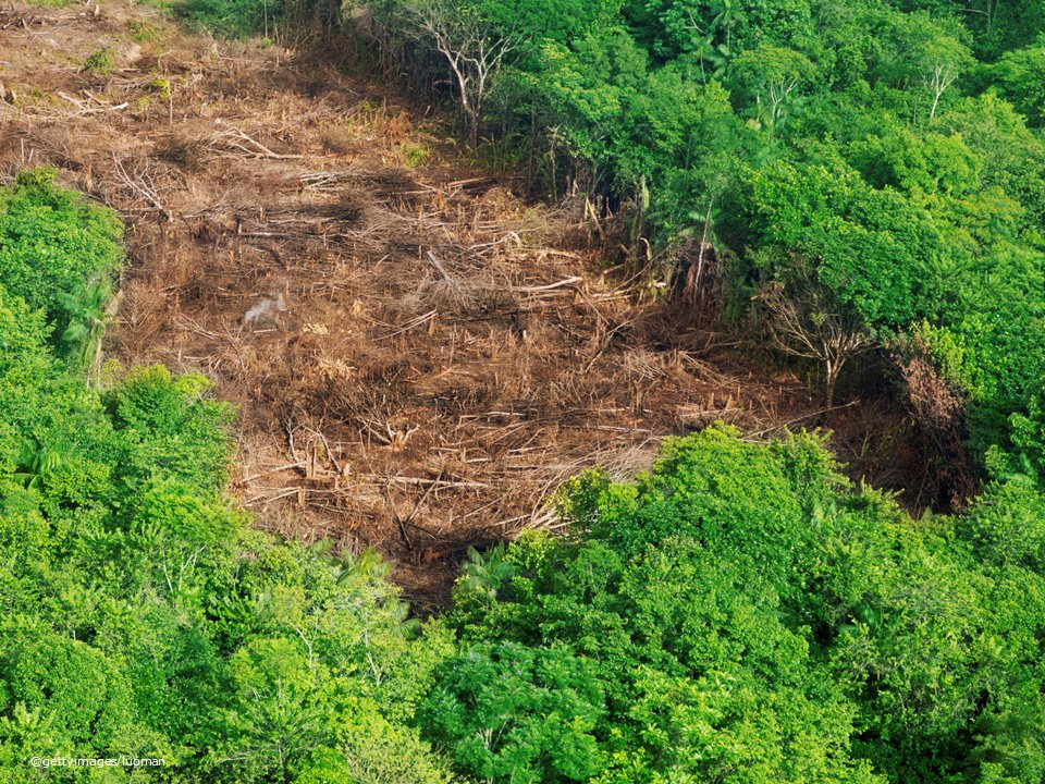 Public consultation: &quot;Deforestation and forest degradation – stepping up EU action&quot;.   Help us making the EU , as a major importer of agricultural commodities, a leader on the global solution.  #EUHaveYourSay until 25 February   https:// ec.europa.eu/info/law/bette r-regulation/initiatives/ares-2018-6516782/public-consultation_en &nbsp; … <br>http://pic.twitter.com/PO6RBGWvEq
