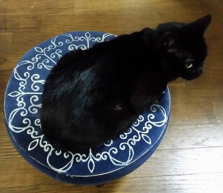 私が使うイスと言うイスに全て乗っかってくれる黒猫くん。  わが家のイスは、キミの為にある。 ベッドもキーボードもね 笑  #黒猫 #イス取りゲーム #仕事のジャマだけは止めてー