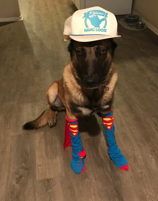 It's #NationalDressUpYourPetDay Baron is most definitely a fan of this National day! Let's see your pictures! Post them in our comments! Photo