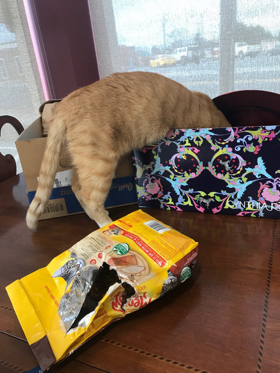 Safe to say Sgt. Butters over-indulged #mocksvillepd #sargebutters #CatsOfTwitter #BluePawsMatter #MondayMotivation<br>http://pic.twitter.com/EFW6xnnyPC