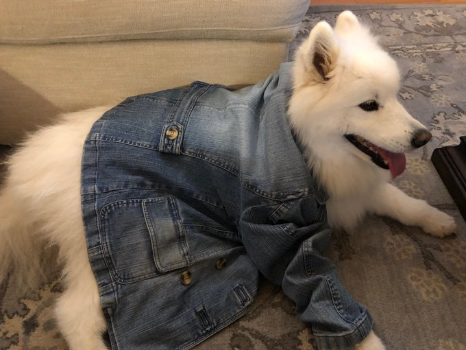 She saw all the other girls wearing them, and begged us for a denim jacket of her own #NationalDressUpYourPetDay @news4buffalo Photo