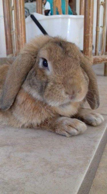 @programa_hoy #MiMascotaEs tengo dos hermosos conejos ❤❤😍 Foto