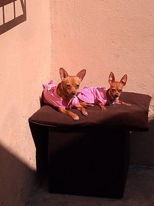 #Mimascotaes son las princesas de la familia Islas Ruiz 😍👪🐶🐶 Foto