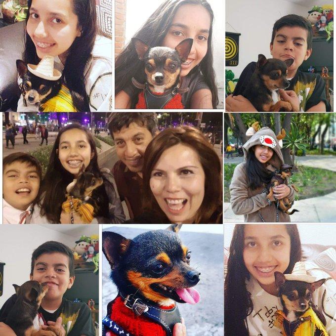 @programa_hoy #MiMascotaes Bilirrubino nuestro muy amado❤ Bill, no es solo una mascota es parte de nuestra familia y nos hace muy feliz que asi sea 😁 Foto