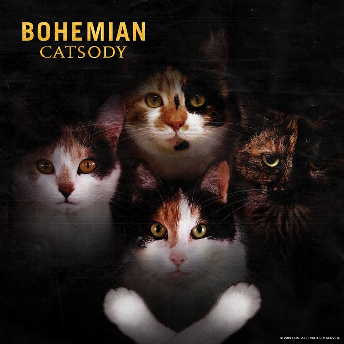 """One lost album cover from Queen's back """"Cat-a-logue"""". #NationalDressUpYourPetDay Photo"""