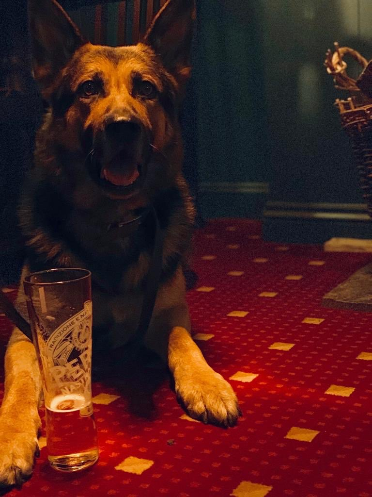My No 1 Boy my right hand man for so long , The  PD Tyke , a hard day for me  as he retires to make way for PPD Tigger , so a retirement drink in the local on his first day as a civilian , I think he's settling into retirement nicely !! #myworld #righthandman #GermanShepherd <br>http://pic.twitter.com/Nzxx05JdWa