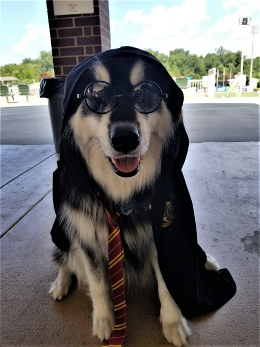 Hairy Potter has arrived to cure your Monday blues! #NationalDressUpYourPetDay Photo