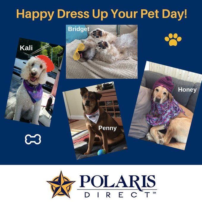Happy Dress Up Your Pet Day! #dressupyourpetday Here are a few of our fur babies showing off their style :-) Photo