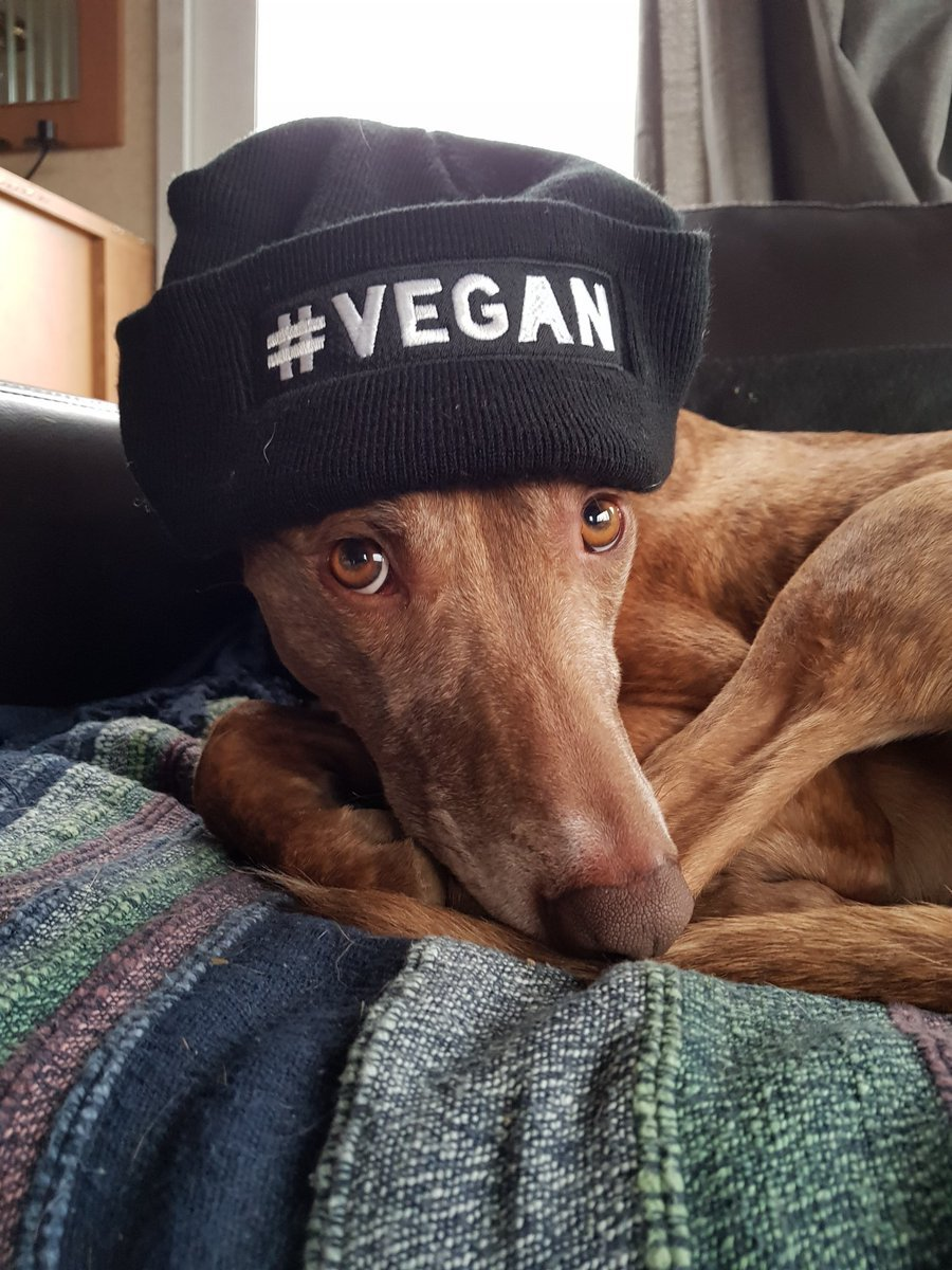 VEGANUARY MASCOT THIS WEEK IS FERGUS!    He is showing his support for #veganism &amp; for everyone taking part in #Veganuary!    After nearly losing his own life twice, before coming to @BTWsanctuary he would like to see a #Vegan world full of #Love and #Compassion.    #GoVegan<br>http://pic.twitter.com/3MFHg6CcIx