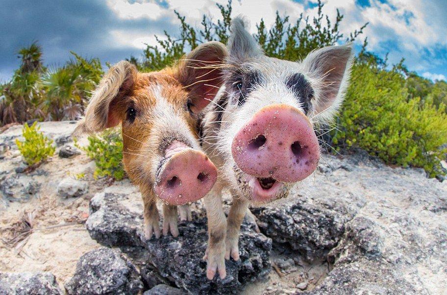 Прикольные кошек, прикольные картинки с свинками