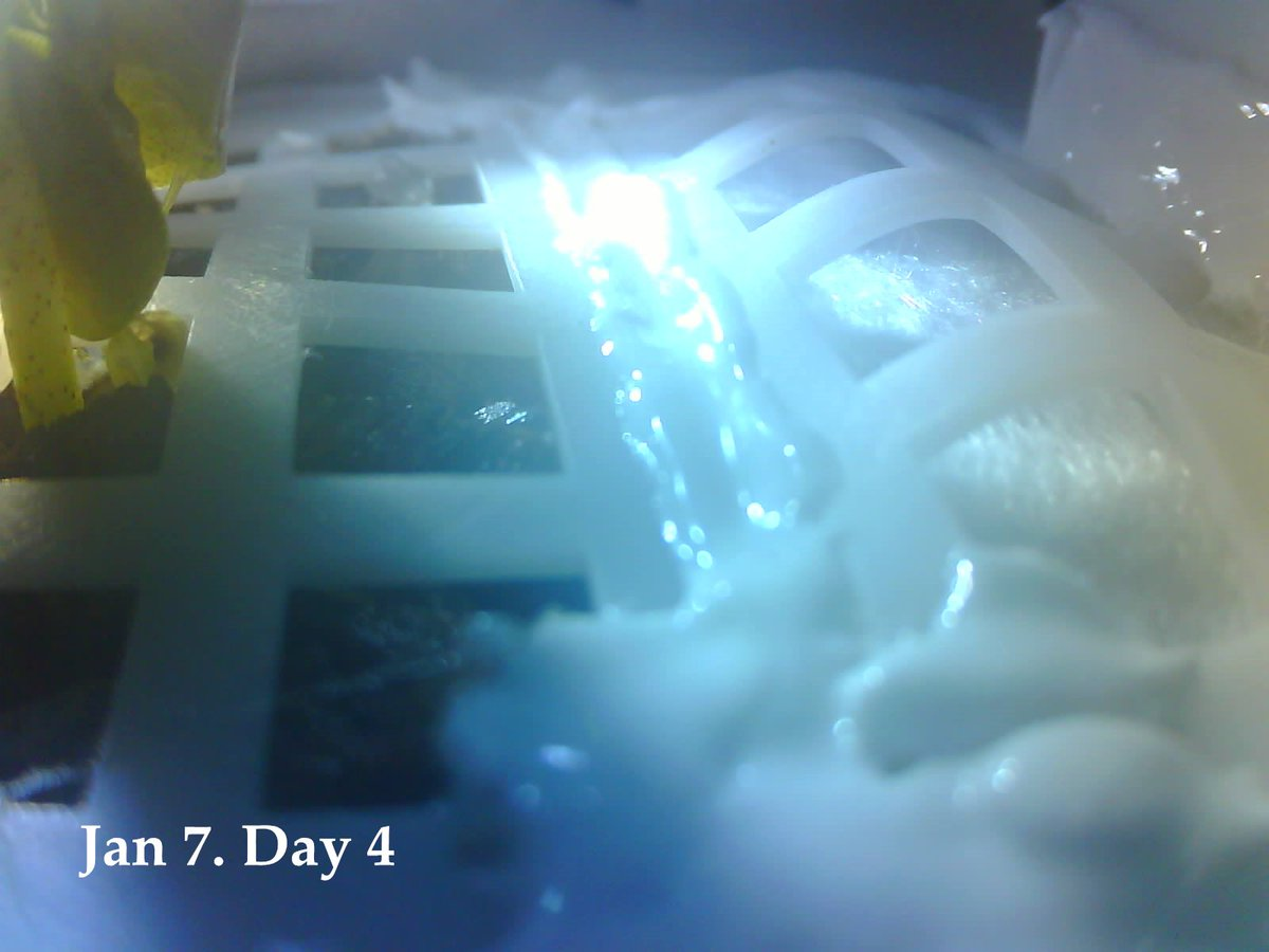 Seedlings in space! First-ever cotton plant on the Moon growing in #ChangE4 mini biosphere https://t.co/L8YpXqoVIG