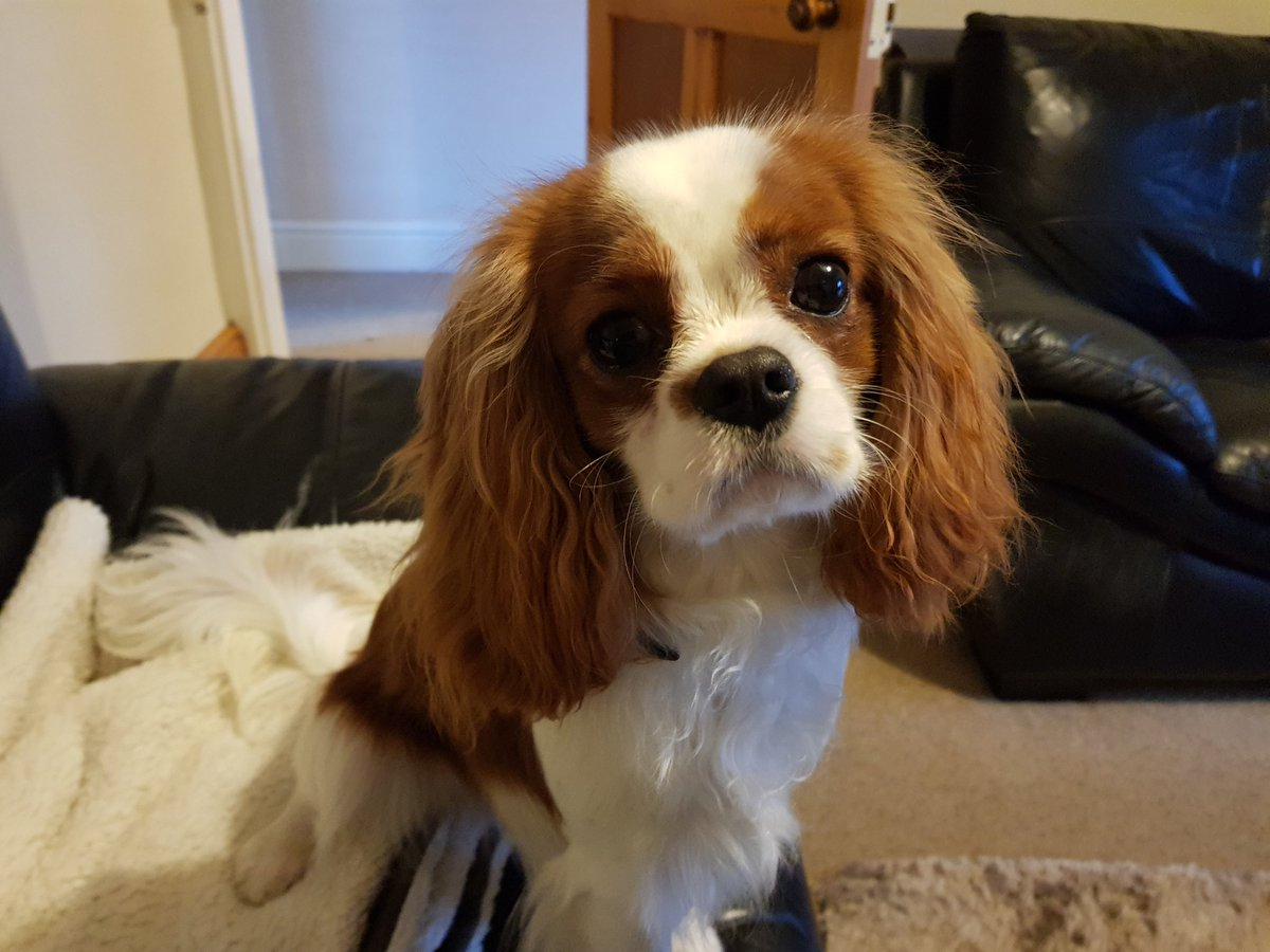 Watson here would like to name and shame his mum for always leaving her straighteners on @SYFR #IfTheyCouldTalk