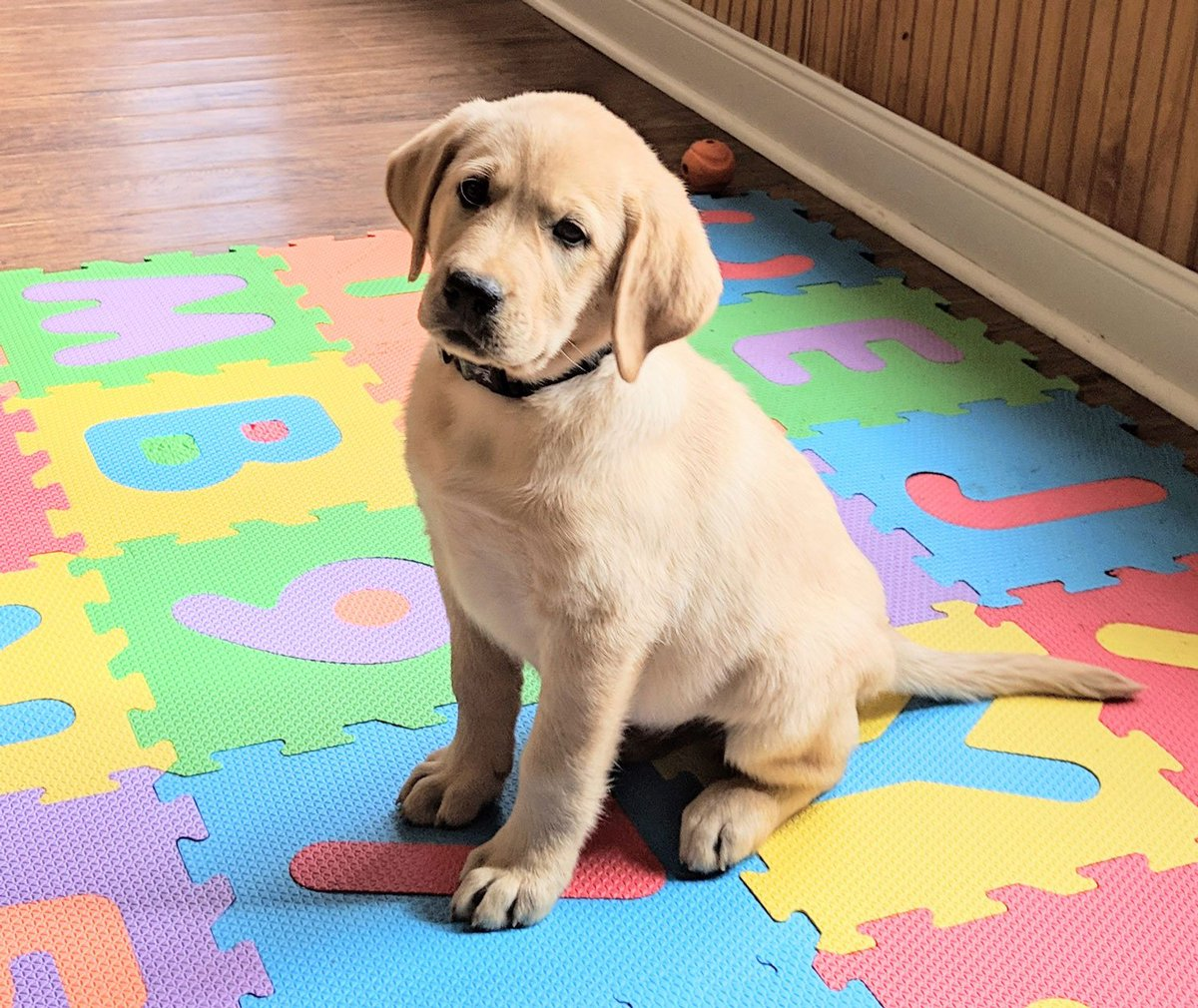 Big news! We're working with Project2Heal to help train a service dog for someone in need. This adorable puppy will be at some of our practices and games this season.