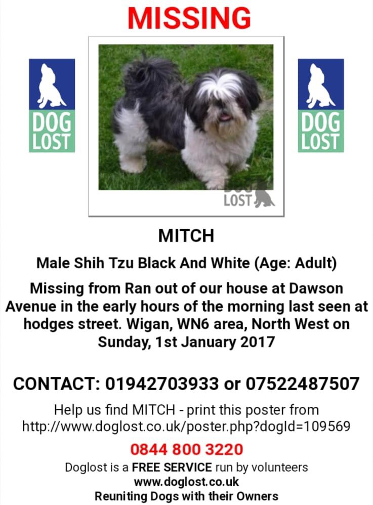 Dawn On Twitter Missing Mitch Male Shihtzu Missing From Wigan