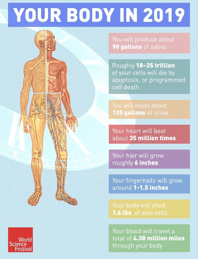 Your body according to Science in 2019 #NewYear