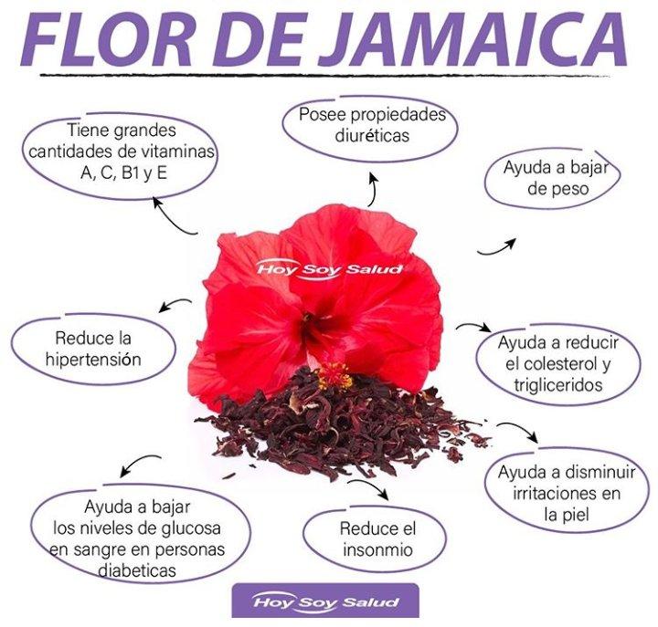 flor de jamaica para bajar los trigliceridos