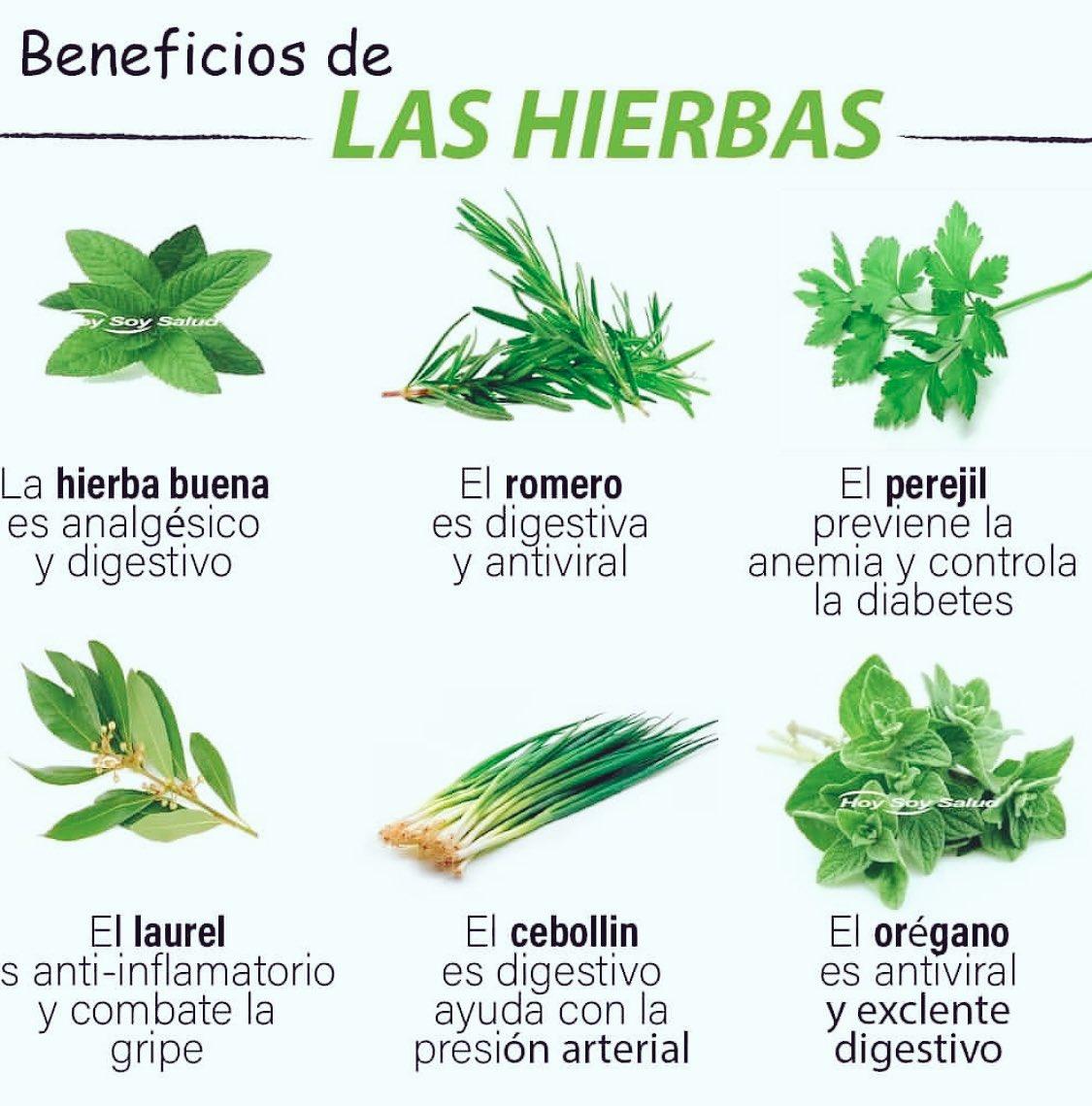 Beneficios de las hierbas 🌿🍃🌱#meditacionhoy #buenavida #buenavibra #natural #salud