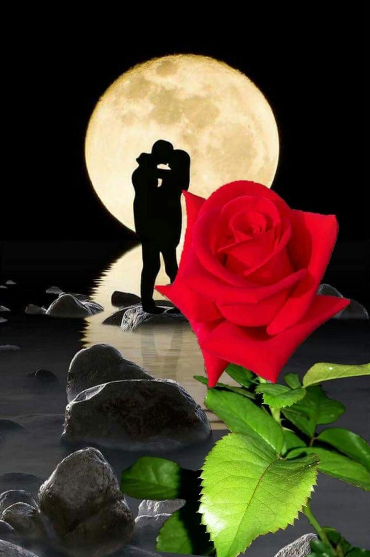 Днем, картинки спокойной ночи с розами в снегу