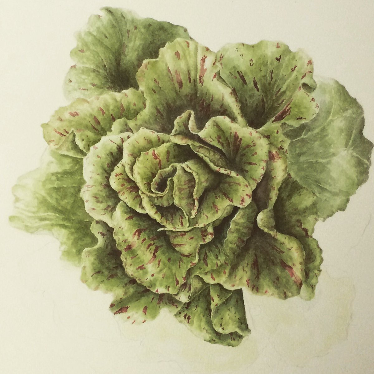 My @fernverrow 'Castelfranco ' comin' along rather slowly - been painting this one since December....