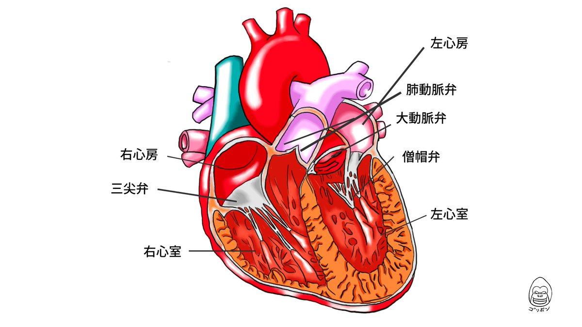 イラストで解剖学 Tagged Tweets And Download Twitter Mp4 Videos Twitur