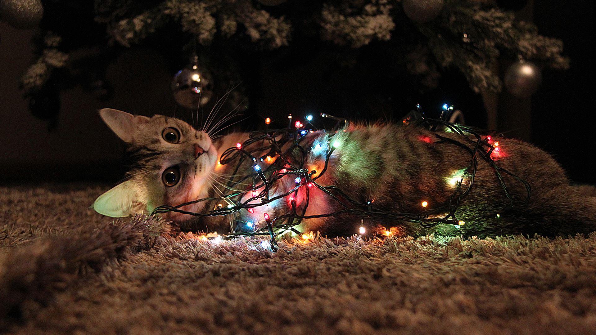 можно новогодние обои на рабочий стол год мыши фото это