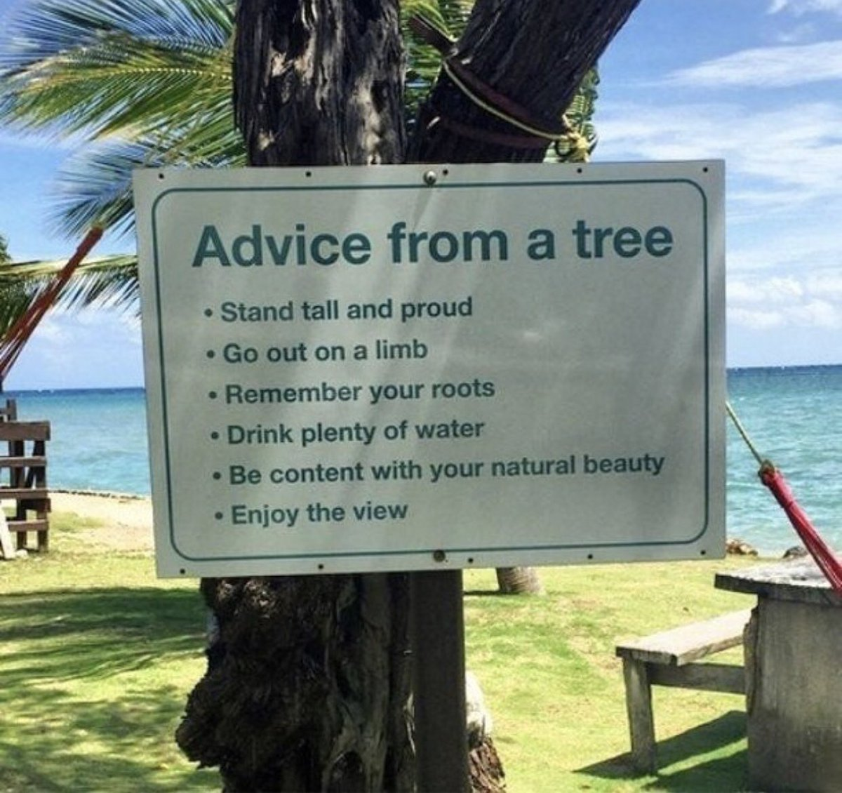 Advice from a tree— Stand TALL my friends 🌴