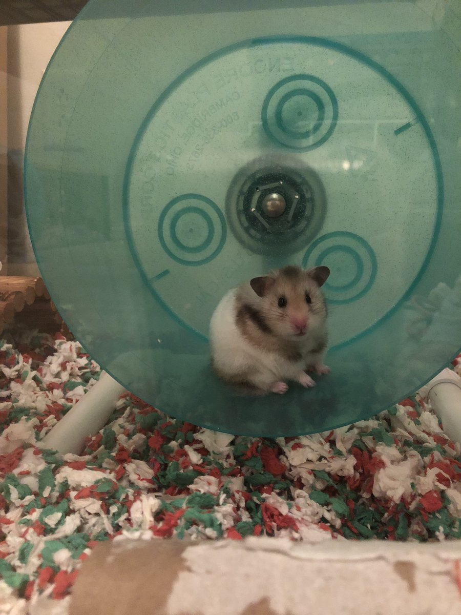 One of my hamsters has a tumor and is really sick yall