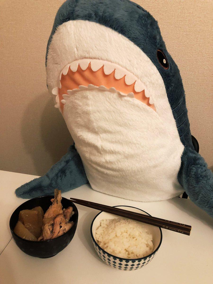 IKEAのサメ、いざ買ったら想像の50倍くらい生活感出してくるし500倍くらい住人ヅラしてくる……かわいい……(ご飯はおいしくたべました)