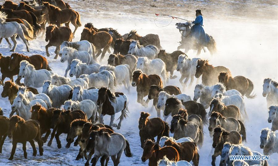 Horses run to keep warm