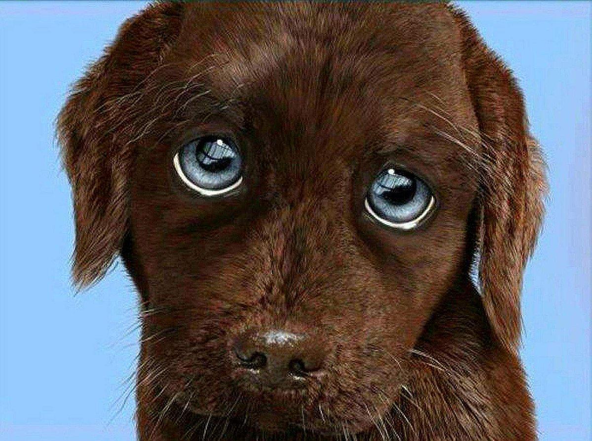 новые синие картинки жалобные глазки нему