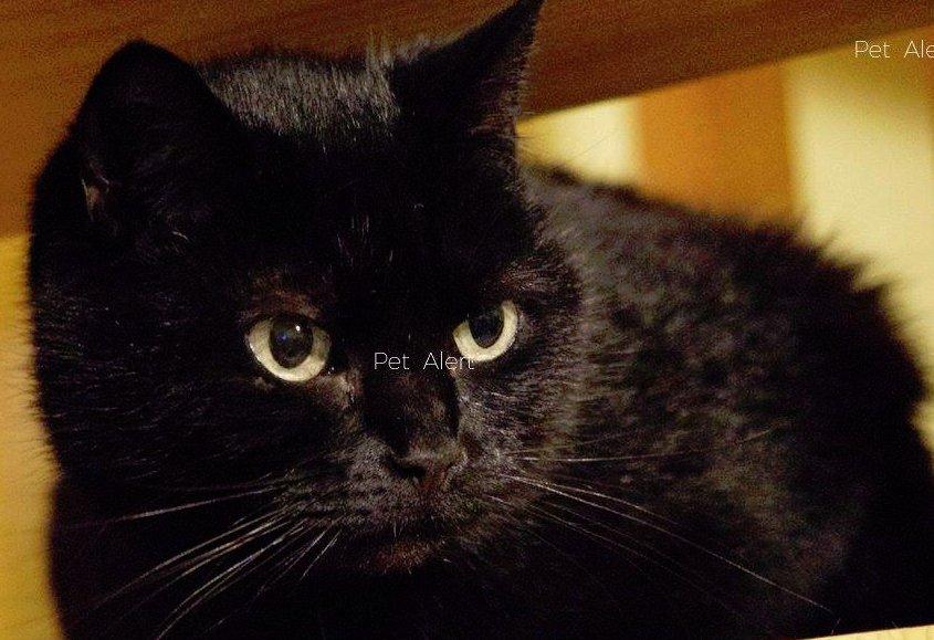 chatte noire 18 Black taxi sexe