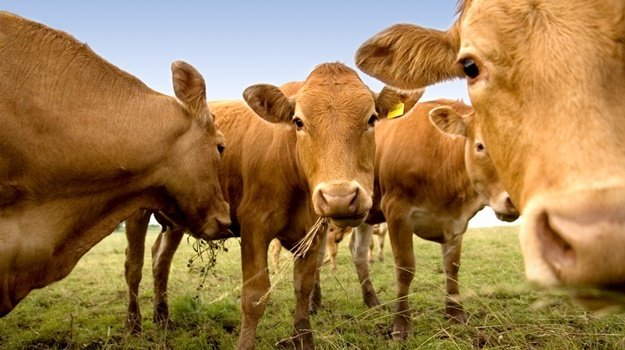 SA finds foot-and-mouth disease in cattle in Limpopo  https://t.co/BYVpq8uNbX https://t.co/Lsuj7lI0PU