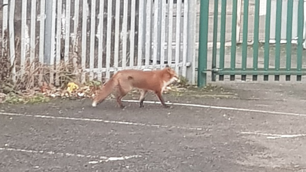 Early morning visitor interested in working with us to attract more chickens and rodents to their new escape room experiential activation.