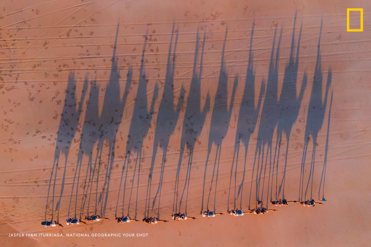 Top Shot: Camels in Cable Beach https://t.co/g5kZ2utztS #YourShot