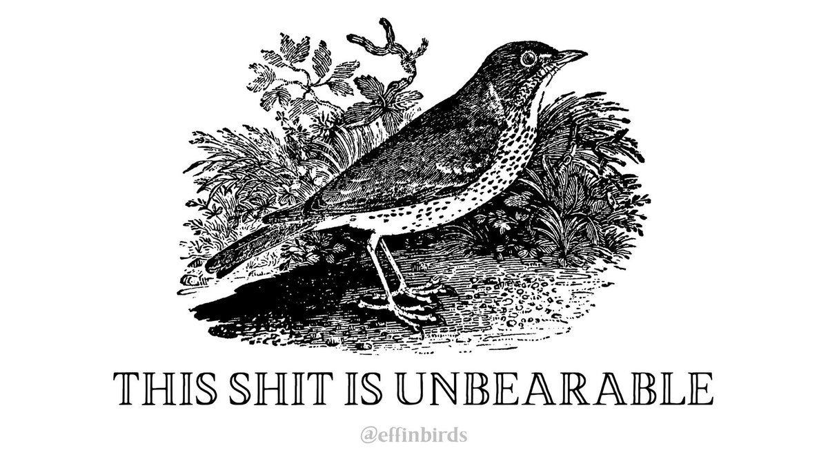 Effin' Birds (@EffinBirds) on Twitter photo 17/01/2019 02:18:54