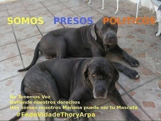 SON 116 DIAS d secuestro en el @SEBINoficial Helicoide d THOR y ARPA las mascotas del Cnel Garcia Palomo Pido un llamado d solidaridad a las ONG animalistas El Gral MANUEL CRISTOPHER FIGUERA los acuso de TERRORISMO y las condeno a Morir d desnutrición UNIDOS PODREMOS LIBERARLOS