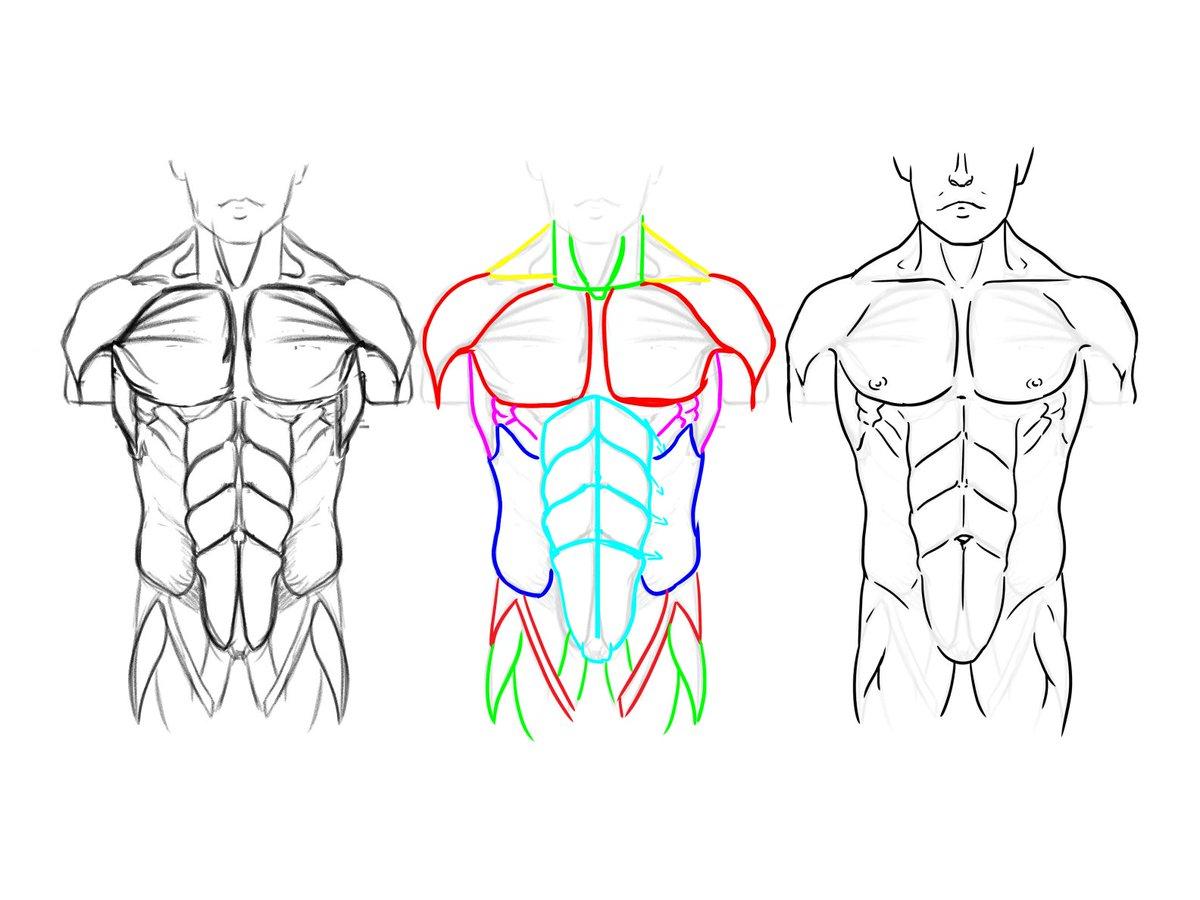 abdominal diagram wiring diagram database Gallbladder Diagram diagram of chest an wiring diagram database neck diagram abdominal diagram