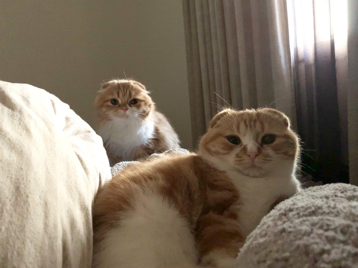 おはよう😐😐 いつも一緒に寝てます🥰🥰🥰  #まるお #もふこ #猫