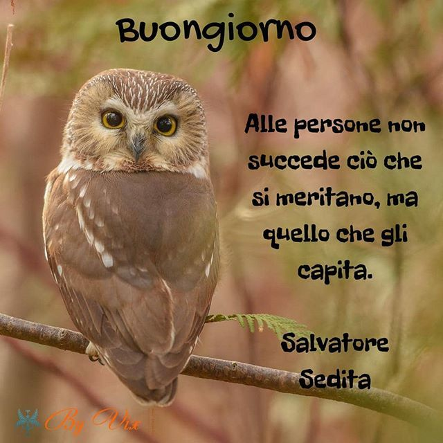 Buongiorno Frasi Twitter.Vittorio Mechilli On Twitter Buongiorno Frasi Frasisagge Saggezza Perledisaggezza Citazioni Saw Whet Owl Photo By Rawbeetwoo Please Visit The Artist S Page For Additional Information Instagram S King Of Raptors
