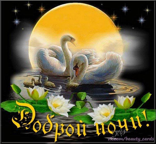 Днем, открытка доброй ночи с лебедями