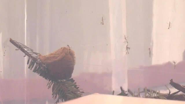 A #Christmas nightmare: Hundreds of praying mantises invade Virginia woman's home https://t.co/9xjQJGMv9d