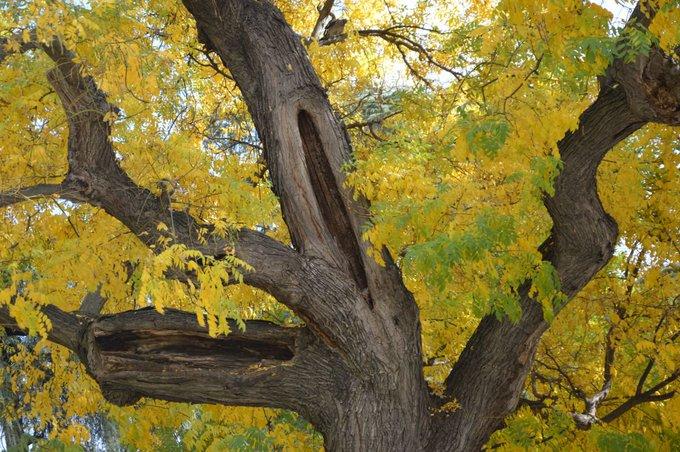 A veces nuestro destino semeja un árbol frutal en invierno. ¿Quién pensaría que esas ramas reverdecerán y florecerán? Mas esperamos que así sea, y sabemos que así será (Goethe) #FelizJueves Foto
