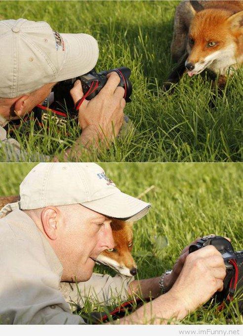 El único disparo que puede recibir un animal es el de una cámara 📸🦊 #YoNoDisparo #FelizJueves Foto