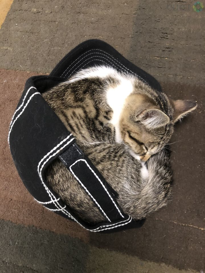 It's time for another Feline Friday! We want to see your fancy felines, so be sure to Chime in at https://t.co/DnlTzKdSUQ under our Feline Friday gallery!  Check out this photo sent in by Kimberly Taylor! I guess if you are tired enough, you can sleep anywhere!