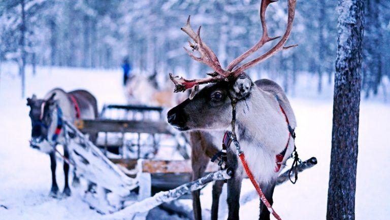 Visit Rovaniemi Visitrovaniemi Twitter