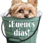 #BuenJueves Twitter Photo