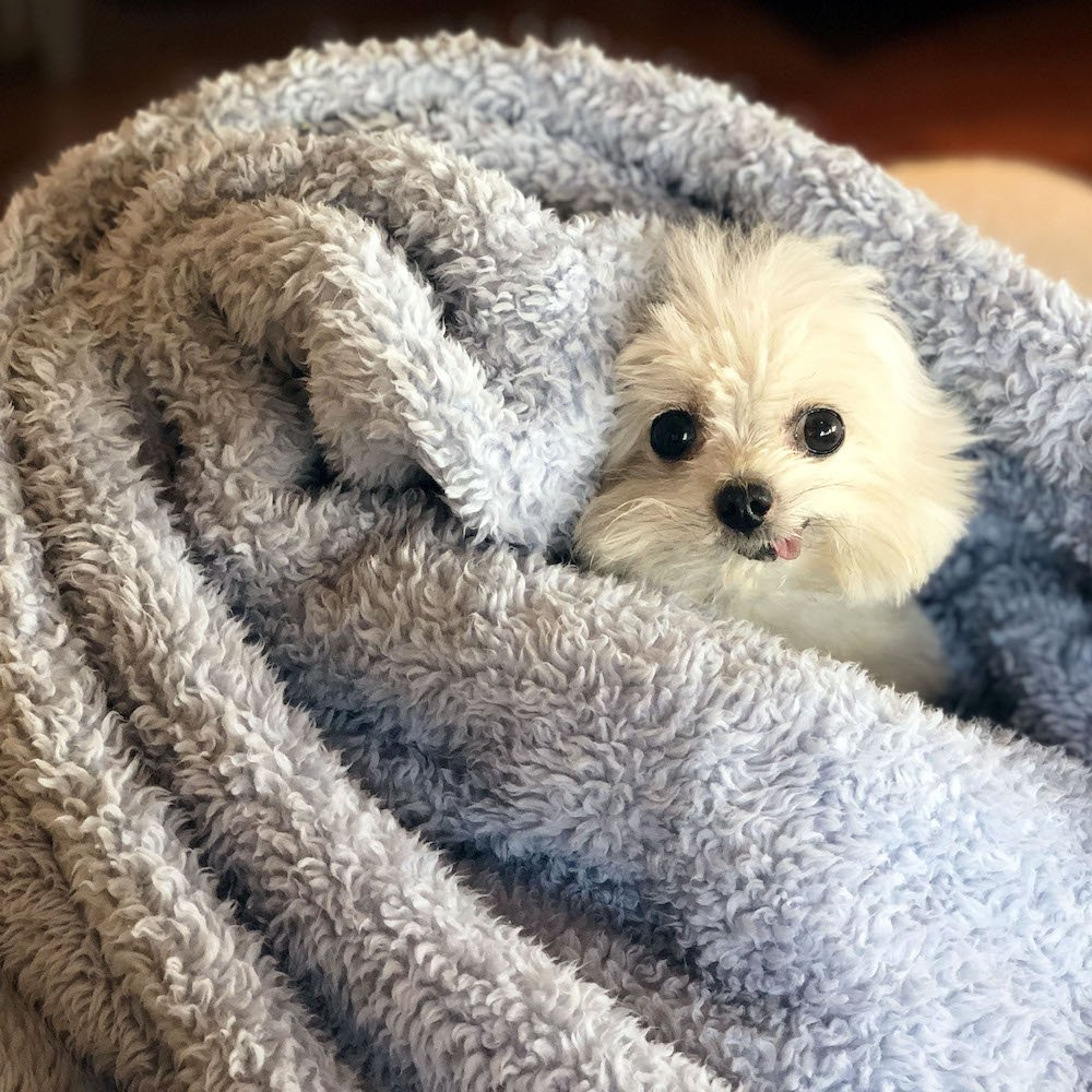 blankies rule  #ThursdayThoughts <br>http://pic.twitter.com/JzRw9kh0rY