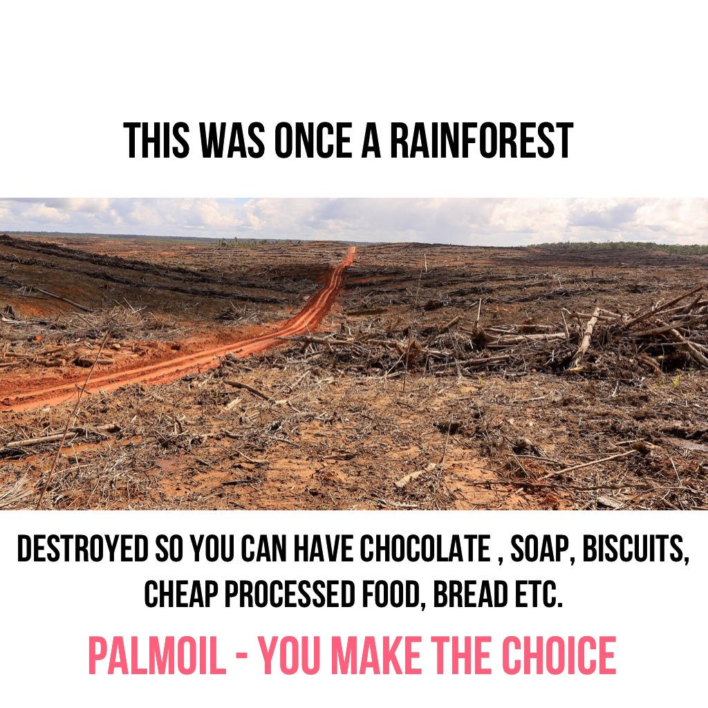 #WestPapua Every rainforest tree felled is also home to hundreds of plant, insect and bird species nesting. #Indonesia is a wretched FUCKING mess and should be sanctioned till it stops. Time for force to be applied! #deforestation #palmoil <br>http://pic.twitter.com/4VoWtMRuwD